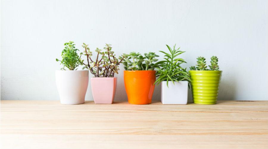 5 plantes qui nous font du bien à adopter d'urgence.
