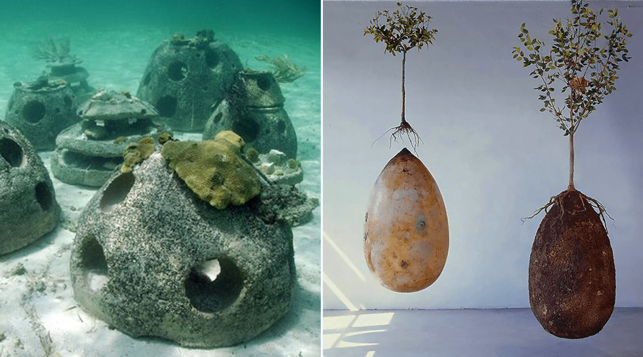 Comment finir sa vie de façon écologique ?