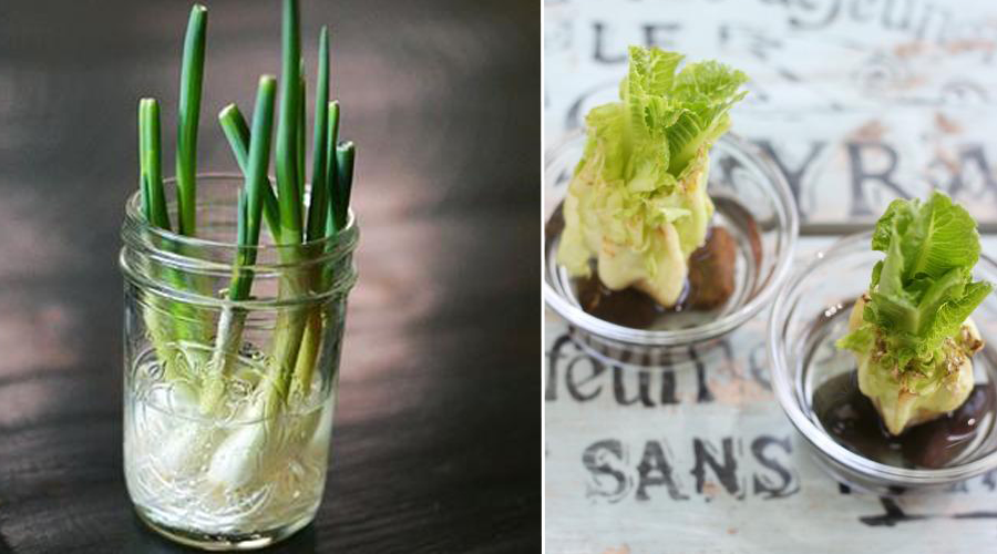 10 légumes et plantes qui peuvent pousser sans terre