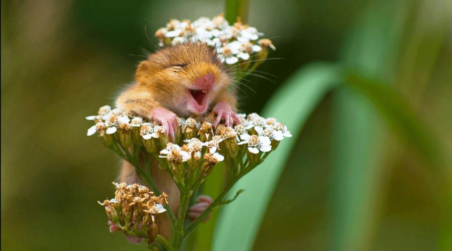 les photos d'animaux sauvages les plus drôles de la planète