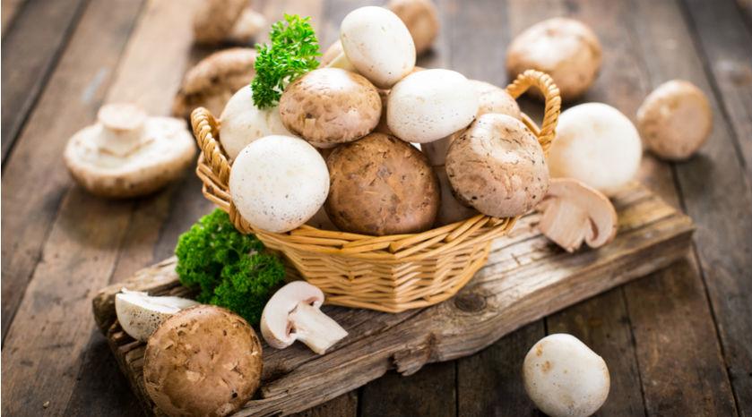 Découvrez les secrets des champignons ; réels alliés pour la santé