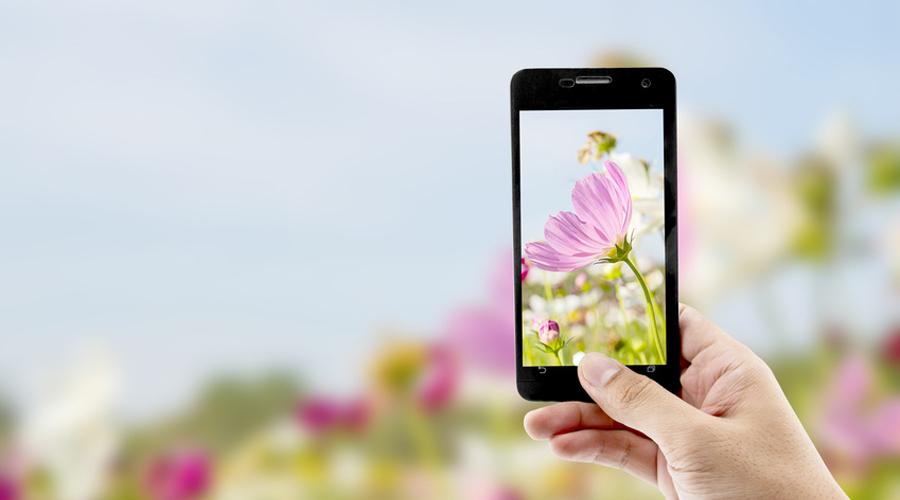 Seek : l'application qui identifie les plantes et les animaux