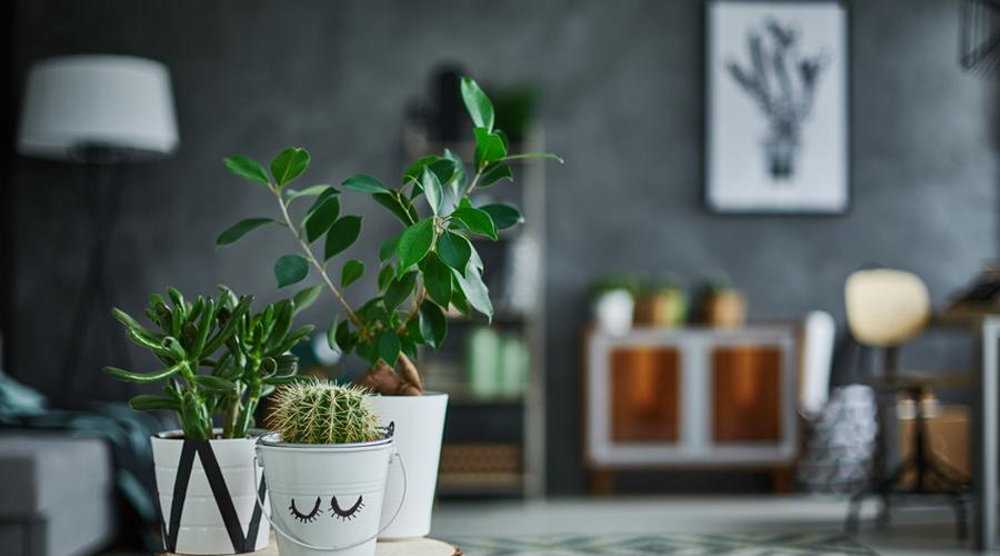 cactus et plantes déco maison
