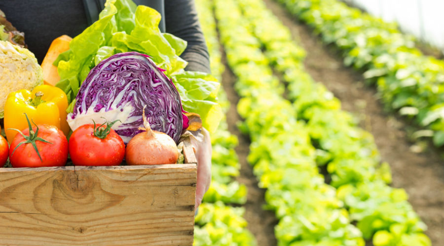 Le Parlement européen renforce les règles pour l'alimentation bio