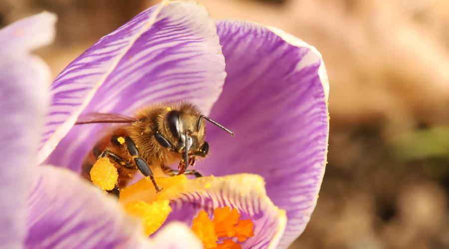 pesticides l 39 ue bannit les n onicotino des pour sauver les abeilles bio la une. Black Bedroom Furniture Sets. Home Design Ideas