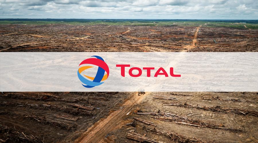 Forêt tropicale rasée pour des plantations d'huile de palme