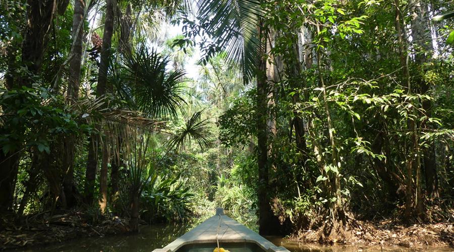 fôret amazonienne Pérou