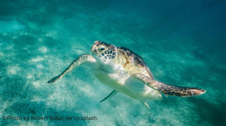 Une grosse tortue verte protégée tuée après avoir consommé du plastique — Thaïlande