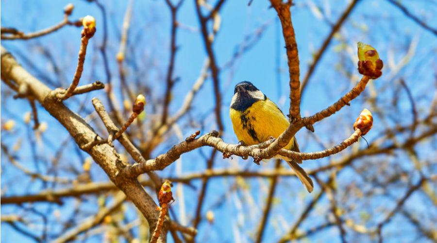 Biodiversité : le déclin des oiseaux, chauves-souris et saumons inquiète les spécialistes
