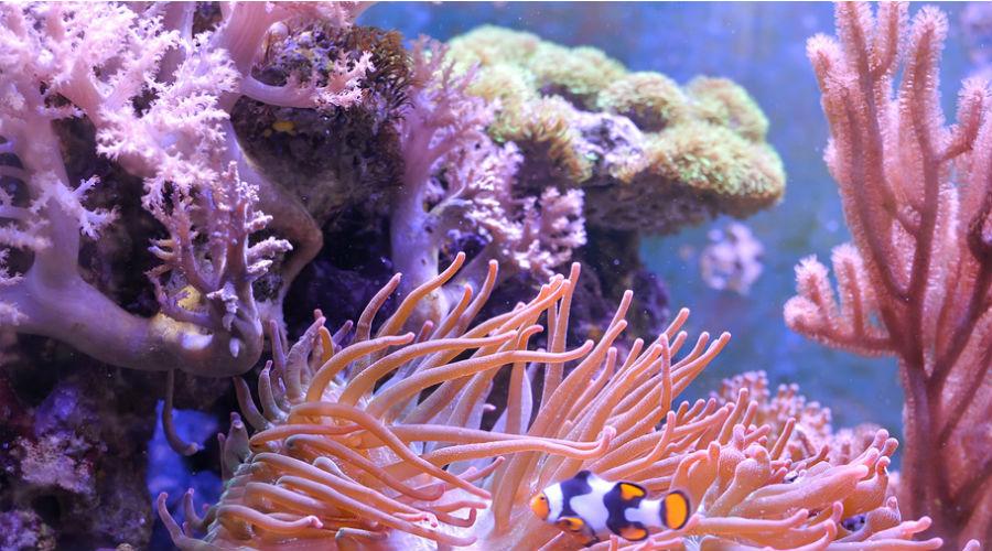Le récif corallien de Belize retiré de la liste du patrimoine en danger