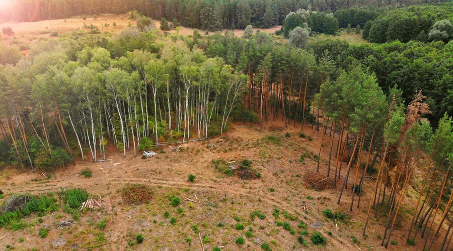 """Résultat de recherche d'images pour """"deforestation"""""""