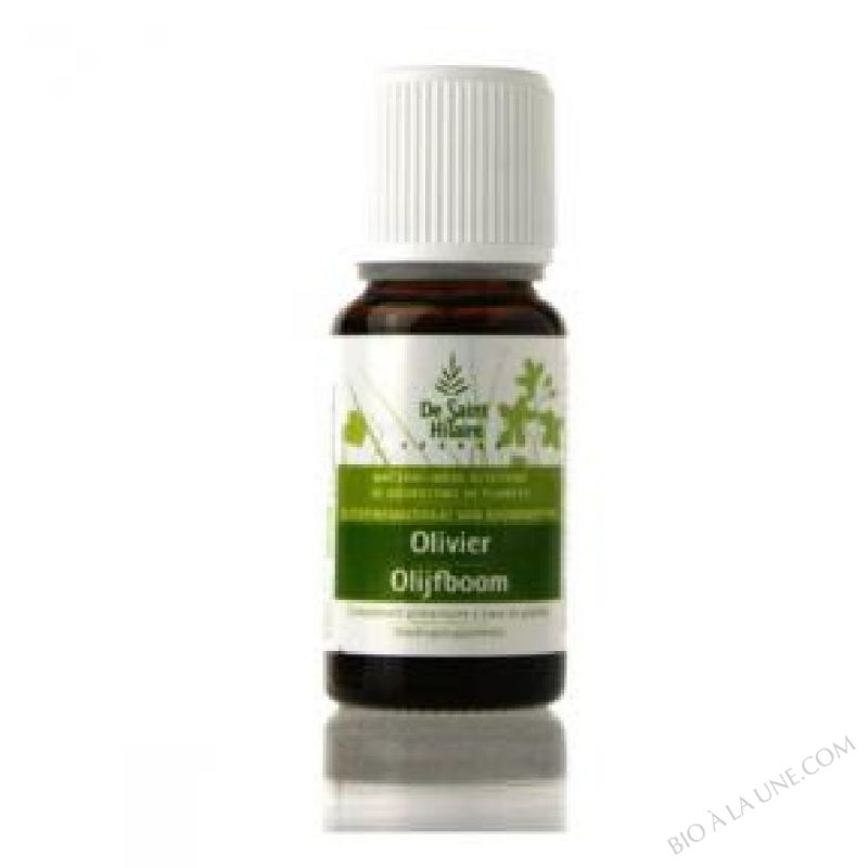 MACERAT D' OLIVIER BIO  30ML