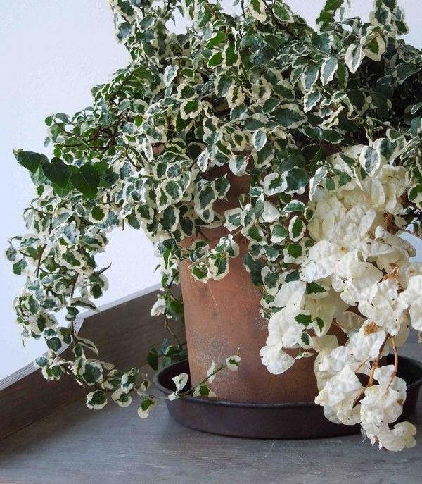 15 plantes qui n ont pas besoin de soleil bio la une - Plante qui aime le soleil ...
