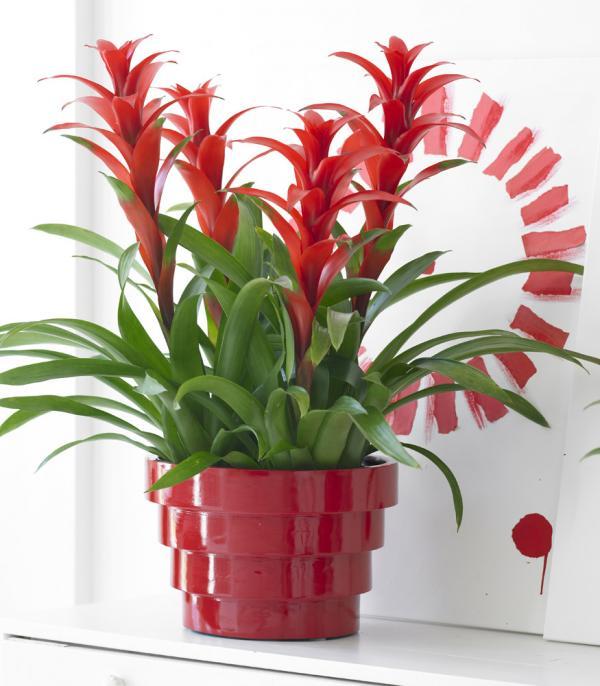 15 plantes qui n ont pas besoin de soleil bio la une for Belle plante exterieur