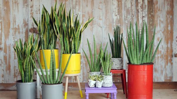 15 Plantes Qui Nont Pas Besoin De Soleil Bio à La Une