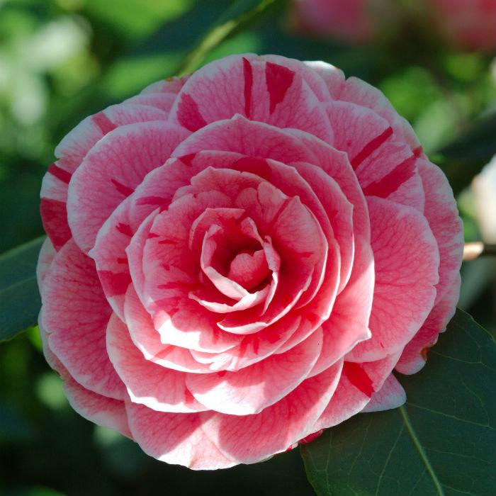 Découvrez les 6 plus belles fleurs d\'hiver | Bio à la une