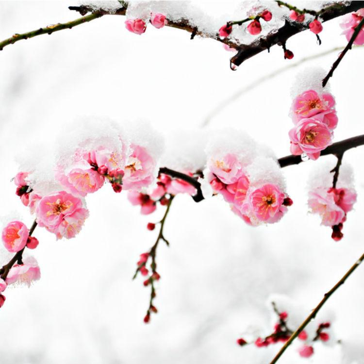 Découvrez les 6 plus belles fleurs d'hiver | Bio à la une